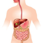 How to keep Digestive System Healthy?